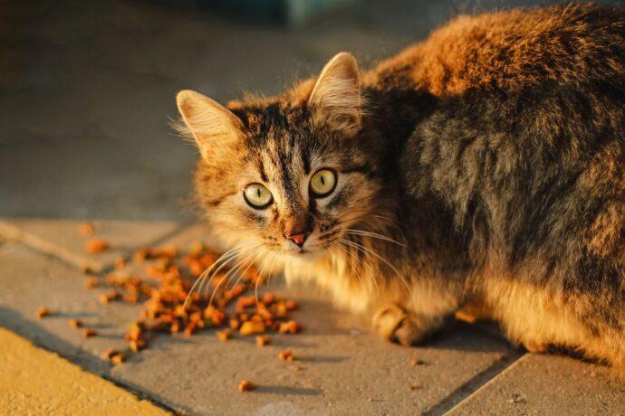 Ração para Gato