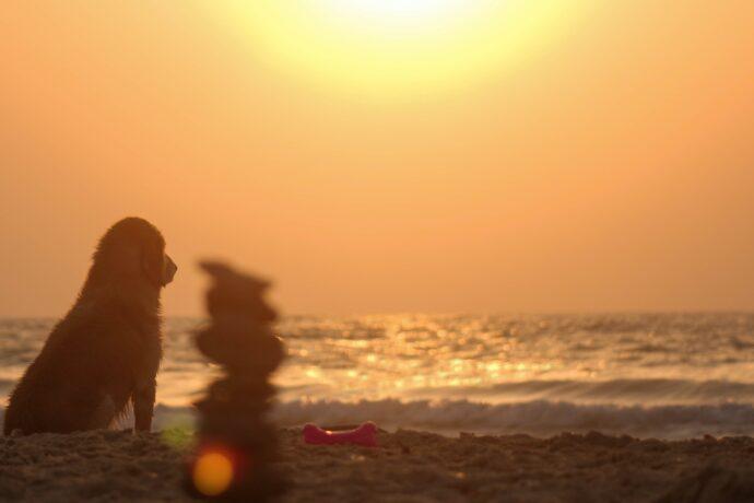 Cão na praia ao pôr-do-sol